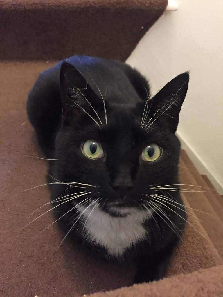 A black tuxedo cat sits at the top of a flight of stairs, its paws neatly tucked. It had wide green eyes, big white whiskers, and it looks alert and questioning.
