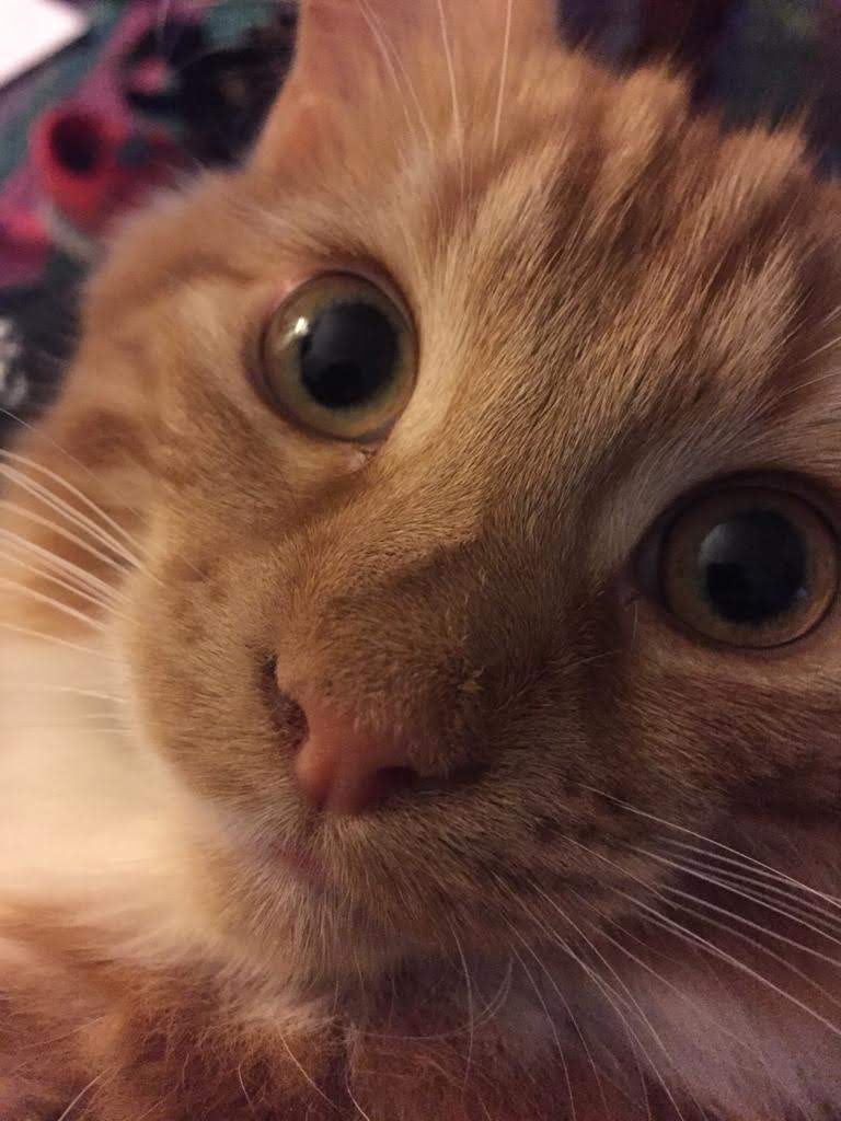 Very tght close-up of a small ginger cat with huge eyes, looking plaintive.