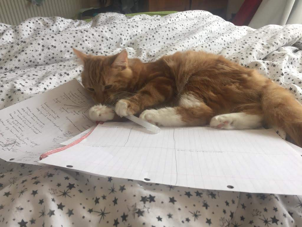 A ginger kitten lying on a bedspread covered in stars. Underneath the cat are two sheets of paper. Its paws are holding a pen.