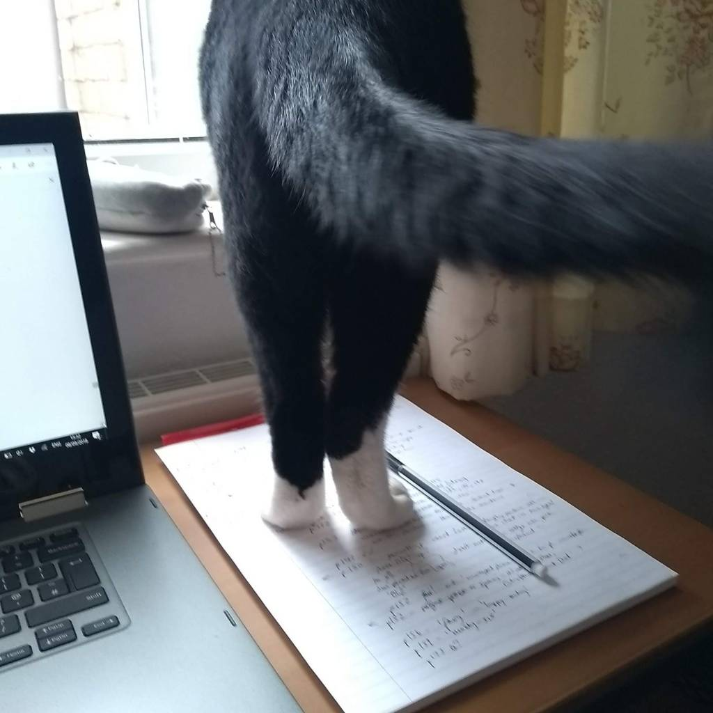 Rear view of a black cat with white socks standing on a notepad on a desk, next to a laptop. The tail swishes past the camera.